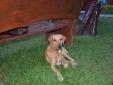 k-2011-02-12-brasilien-0226